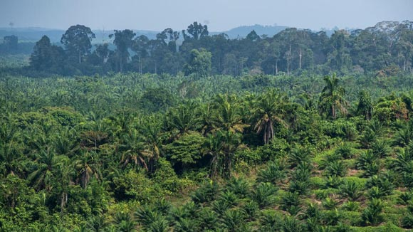Beiersdorf-palm-plantage-chris-j-ratcliffe-wwf-uk-1